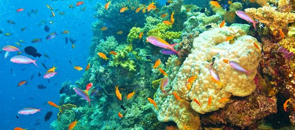 Hoteller i Great Barrier Reef